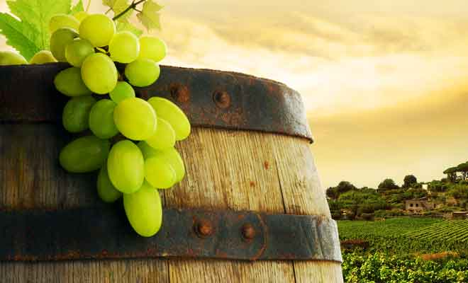 La naissance des vignobles en Nouvelle-Zélande