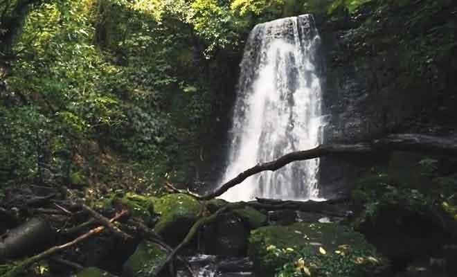Randonnée aux Matai Falls en forêt