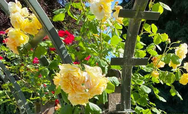 Roseraie du Jardin Botanique