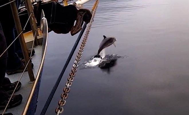 Vous pouvez filmer ou photographier les dauphins quand ils s'approchent du bateau.