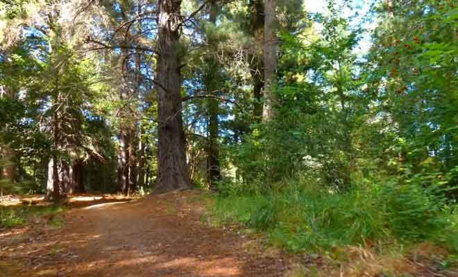Promenade en forêt près d'Hanmer Springs.