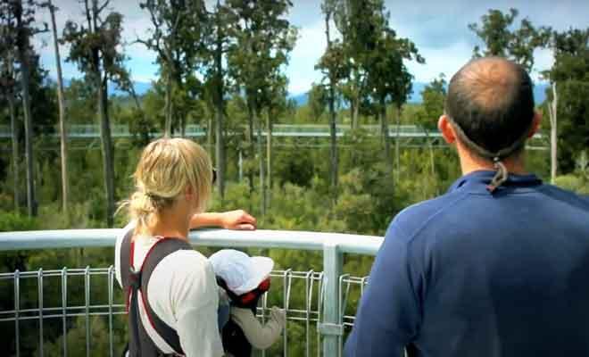 Visite de Treetop Walkway
