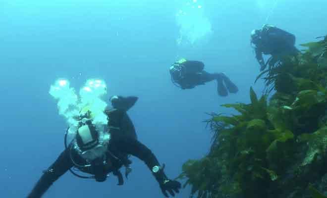 Plongée au Milford Sound