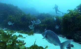 Le site de plongée de Poor Knight Island fait parti des meilleurs du monde selon le Commandant Cousteau.