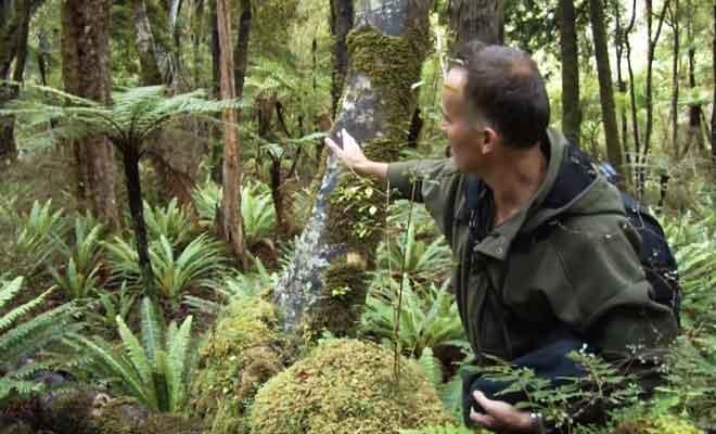 Observation du kiwi en forêt