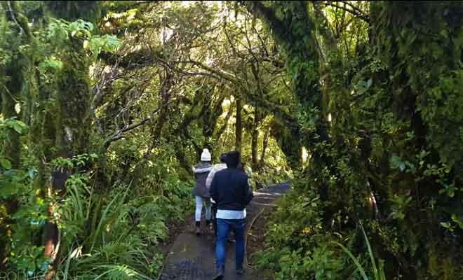 Forêt des Goblins