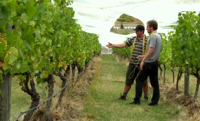 Ne manquez pas ce grand reportage consacré aux vins de Nouvelle-Zélande est à leur dégustation.