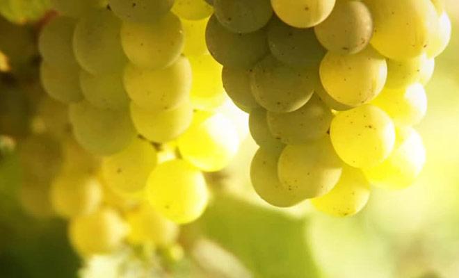 Ce reportage vous apprendra tous ce qu'il faut savoir sur les vignobles de Nouvelle-Zélande.