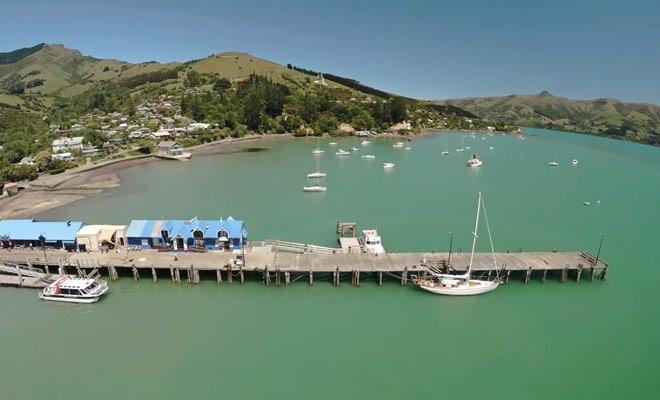 Un joli reportage qui présentent la nage avec les dauphins à Akaroa.