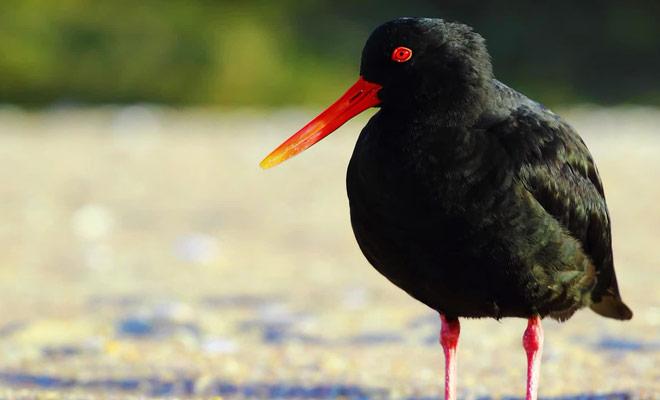 Un reportage consacré aux plus belles espèces animales du pays.