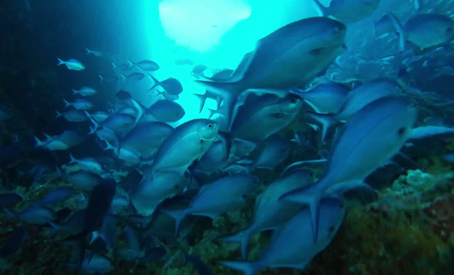 Même si on ne trouve pas de poissons tropicaux la vie aquatique est incroyablement riche et variée.
